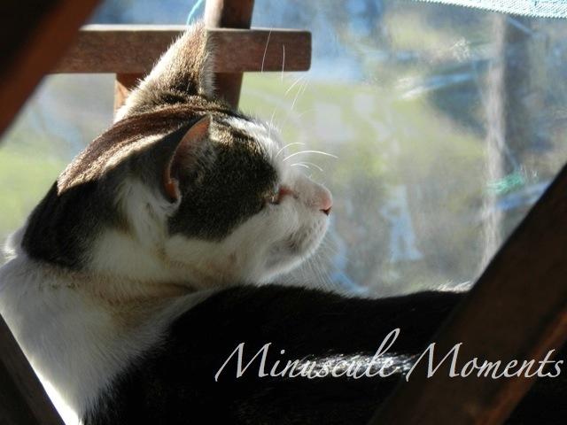cat1 (copy)